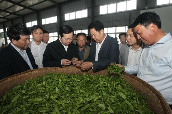 2016年10月,河南人大党组书记、副主任刘春良(右二)莅临光州茶业调研